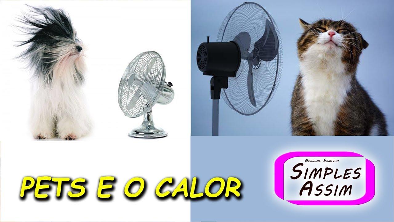 Calor e os animais de estimação