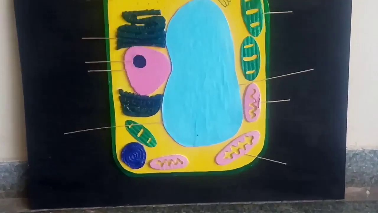Plant Cell 3d Model School Project Youtube Diagram Labeled Animal Vs