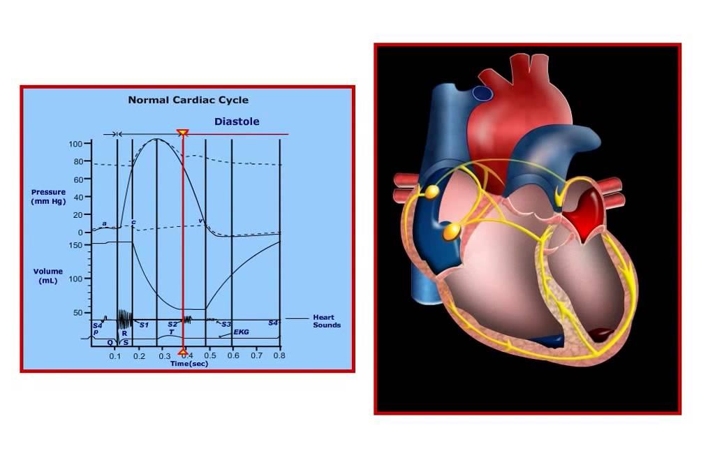Usmle Step 1 High Yield Cardiology Cardiac Cycle