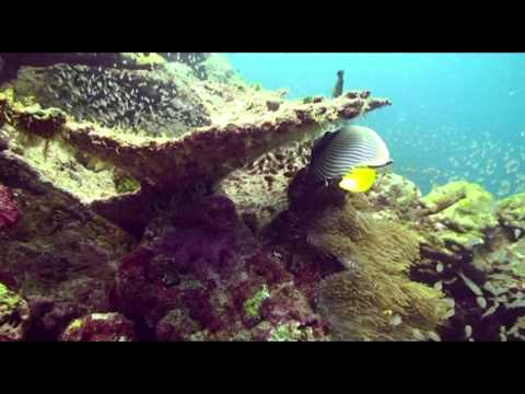 Marine AngelFish Pomacanthidae
