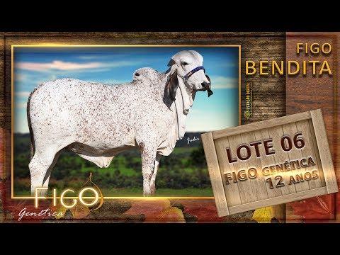 LOTE 06 - FIGO BENDITA - HCFG 1469