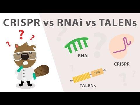 Gene Silencing Methods: CRISPR Vs. TALENs Vs. RNAi