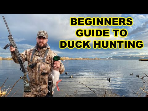 Beginners Guide To Duck Hunting