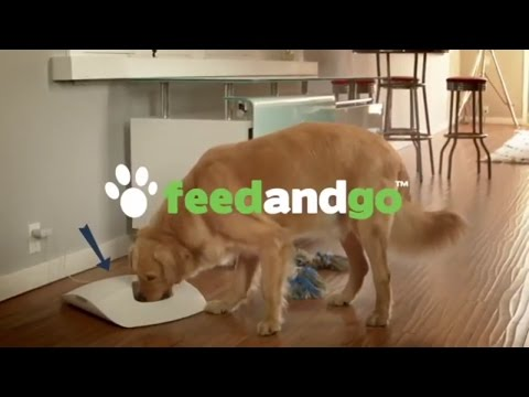 Best Smart Feeder And Pet Camera In One