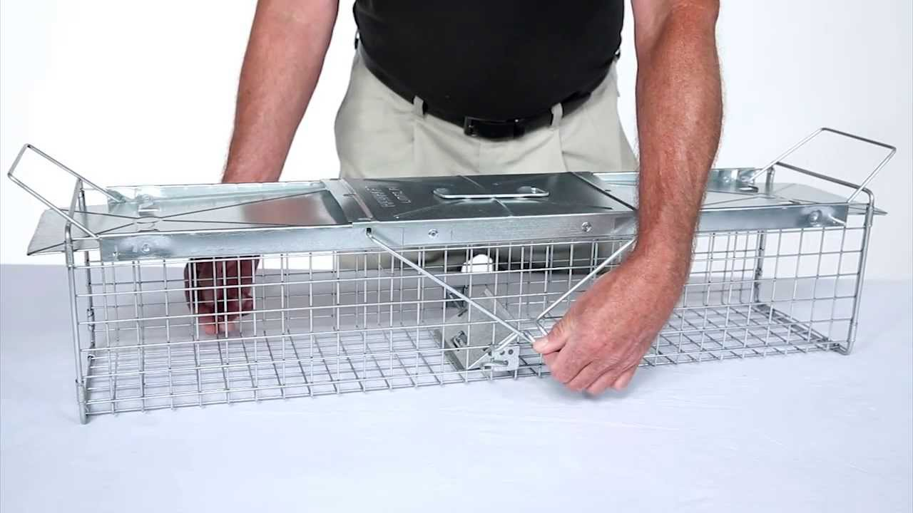 How To Set Havahart 174 Medium 2 Door Trap Model 1040 For