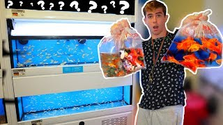 saving-poor-fish-from-pet-store-rescue-mission