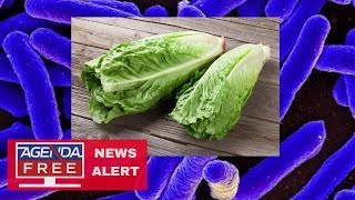 CDC Says ALL Romaine Lettuce Unsafe - LIVE COVERAGE