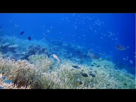 """Hagen, Saudi Arabia - """"Red Sea Tweets"""" 