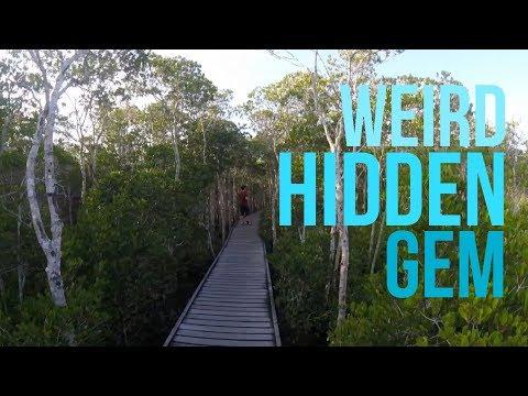 Mangrove Boardwalk - Cairns, Australia