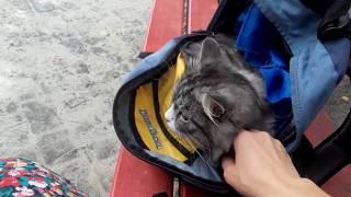 Как вывезти кота? Титры на антитела к бешенству.