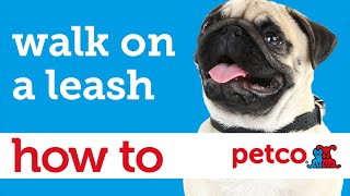 How To Walk Your Dog (petco)