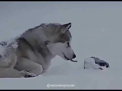 Canavarlarin dostlugu