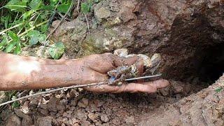 Bắt Ếch Mò Cua Bắt Chuột Cuộc Sống Dân Dã Thật Là Thổi Mái. Minh Bẫy Rắn# 123
