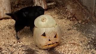 Хэллоуин в школе. Хеллоуин в мире животных. Halloween at school. Halloween in the world of animals.