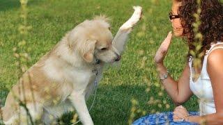 Dog Training Secrets Review | Ur Dog Behavior Problem Stop This Now | User Review Not Scam