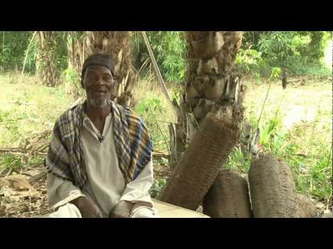 The Way of the Honey -  Sierra Leone participatory video