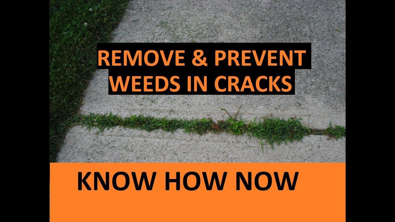 Get Rid Of Weeds In Sidewalk And Driveway Cracks Youtube
