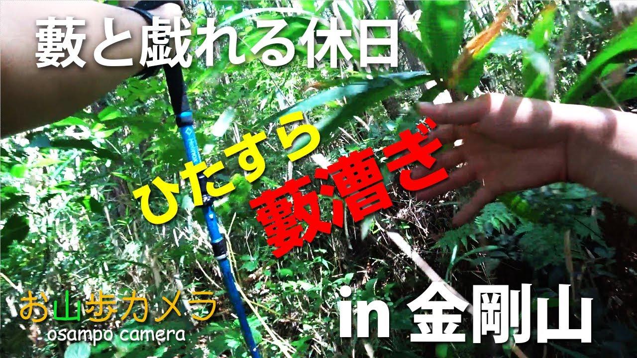 お山歩カメラ 金剛山 藪と戯れる休日 藪漕ぎ登山(2020年夏)