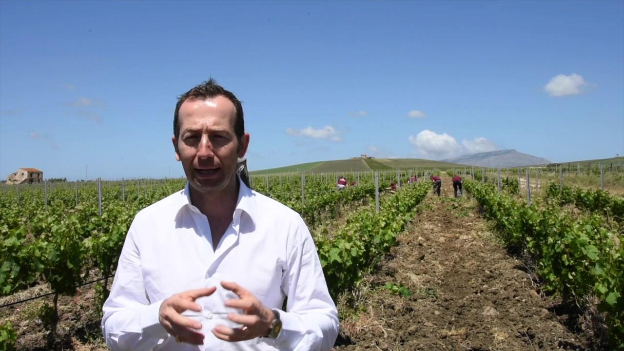Spollonatura tra tradizione e viticoltura di precisione