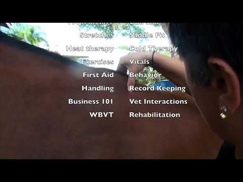 Equine Massage Certification Course Overview - YouTube