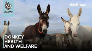 Donkey health and welfare | The Donkey Sanctuary Webinars
