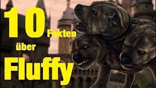 10 FAKTEN über FLUFFY