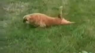 Faze cu animale amuzante