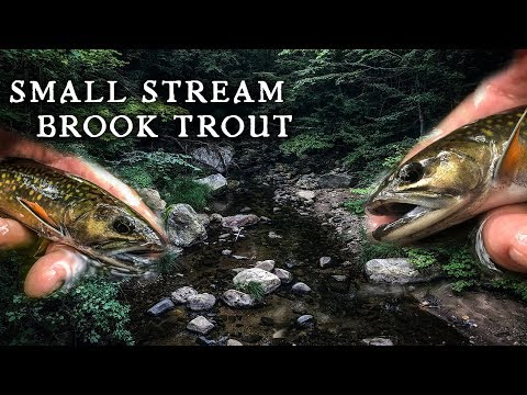 Brookie Fly Fishing On Small New England Stream (West Branch Salmon Brook)