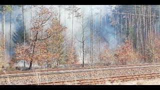 Pożar nieużytków i lasu wzdłuż torowiska Worowo - Łobez