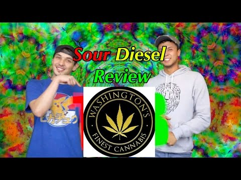 Sour Diesel Outdoor Grown Review | WA Finest Cannabis