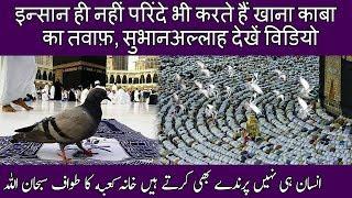 Parinde Khana Kaba Ka Tawaf Karte Huye   Birds Are Doing Tawaf Of Holy Kaba  😍🦅  The Humanity