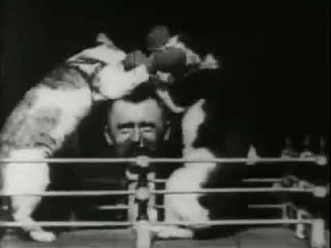 Thomas Edison e o Boxe