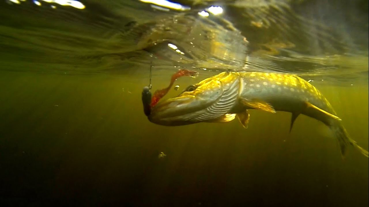 Fishing catching first pike on home made soft bait lure for Fishing lure camera