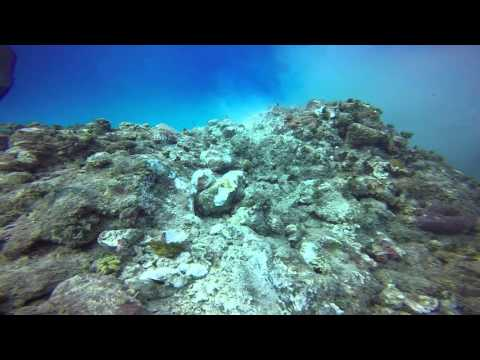 Royal Caribbean cruise lines was given permission to anchor on a protected reef ... so it did