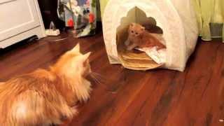 Кошка охраняет котенка.