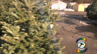 How To Choose A Christmas Trees In Delaware County - Ricks Sheds