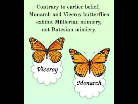 Image result for Batesian mimicry