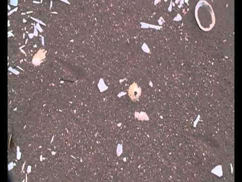 Dog Whelk Vs Limpet (evidence of food pt 2)