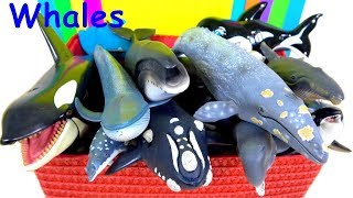 Learn Whale names, Sea Animals Ocean Water Animals | World WHALE Day! Educational