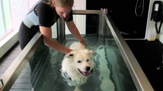 Merlin the Collie Dog: Hydrotherapy rehabilitation for muscle wastage and weight loss