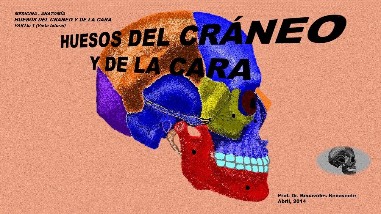 Huesos del Cráneo y de la Cara - YouTube