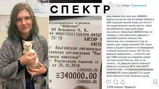 Студентка в Майкопе оплатила долг волонтеров в 340 тысяч рублей для спасения котенка