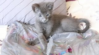 "Bag Inside of a Bag - The ""Inception"" of Cat Videos"