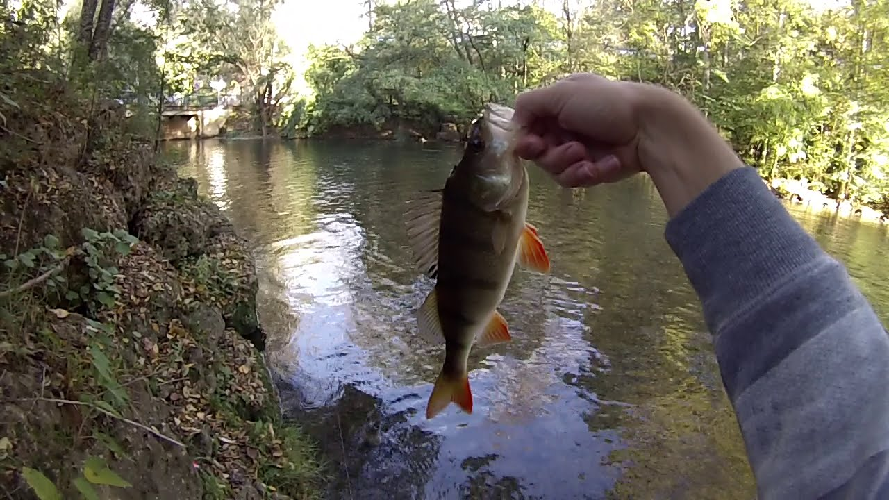 H sur la pêche
