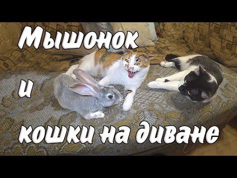 МЫШОНОК С МУСЕЙ И ПАНДОЙ НА ДИВАНЕ / ОСТОРОЖНО, МИЛОТА!!!