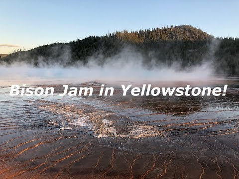 A Bison Jam in Yellowstone! - Northern National Parks Day 6