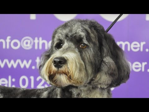 Grooming Guide - How to groom a Labrdoodle - Pet Trim - Pro Groomer