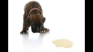 Какой запах отпугивает собак | Как отучить собаку гадить дома