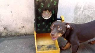 comedor para cachorro