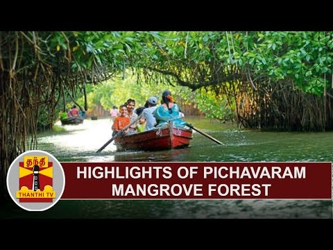 Highlights of Pichavaram Mangrove Forest | Thanthi TV